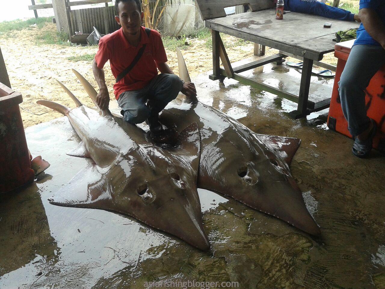 Special catch at Marang, Terengganu